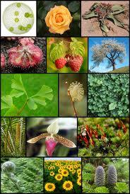 biodiversita-expo-opportunity